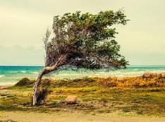 Baum, Strand, Meer, Wind, Landschaft, Larnaca, Zypern