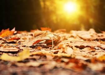 Herbst, Blatt, Laub, Park, Licht, Morgendämmerung